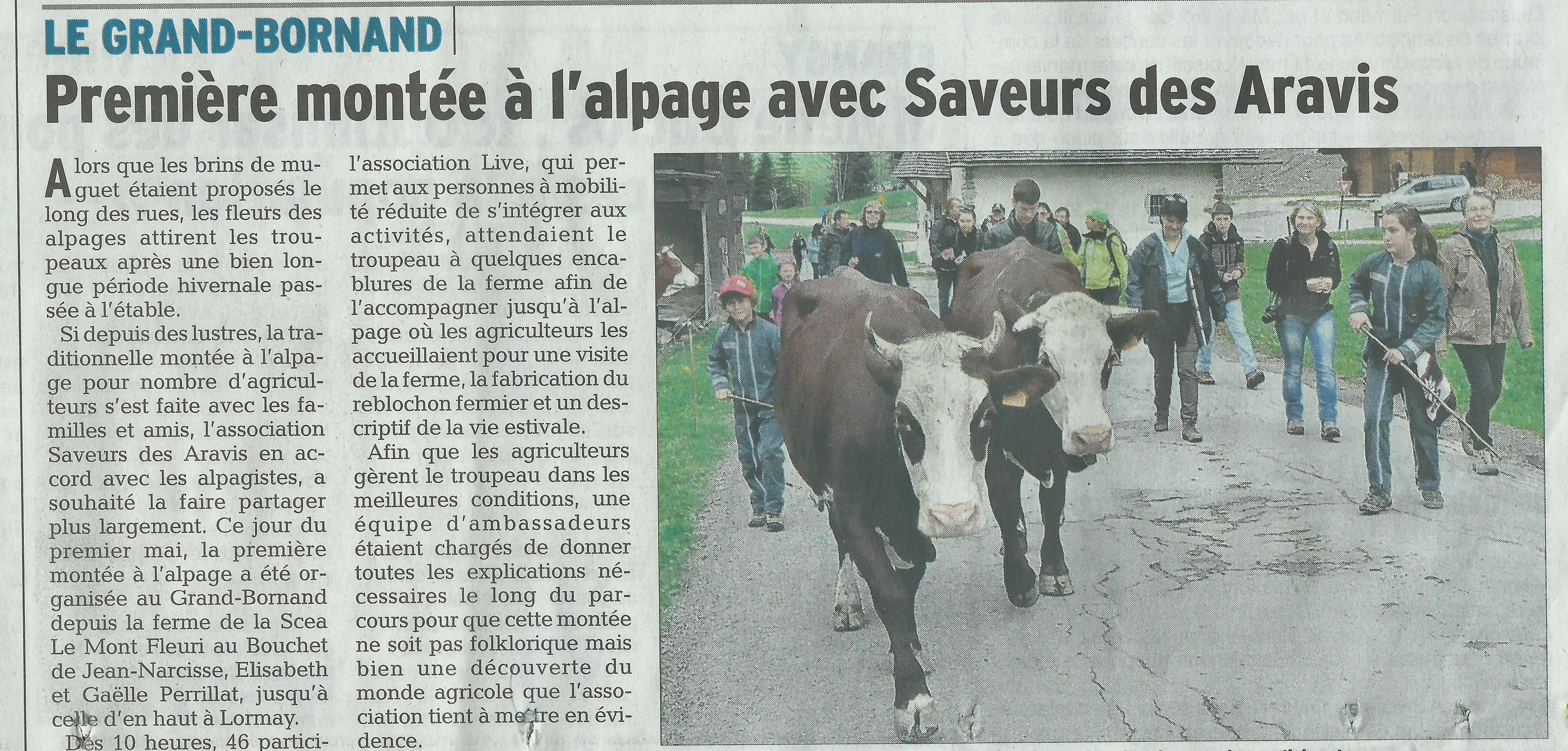 Article du Dauohiné Libéré de la Montée des Alpages avec LIVE et Saveurs des Aravis dans la vallée du Bouchet au Grand Bornand