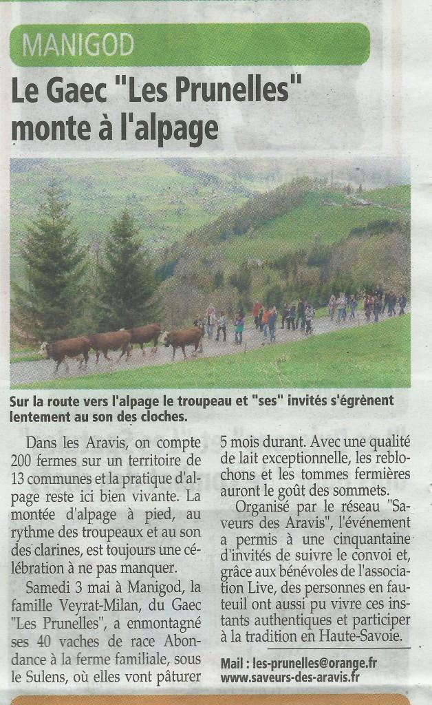 Article de l'Essor Savoyard de la Montée des Alpages avec LIVE et Saveurs des Aravis à Manigod